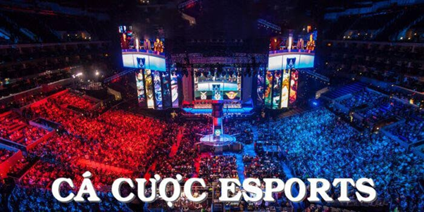 Có loại nhà cái Esports nào trên thị trường?